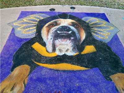 Zelda Bulldog Art Chalk